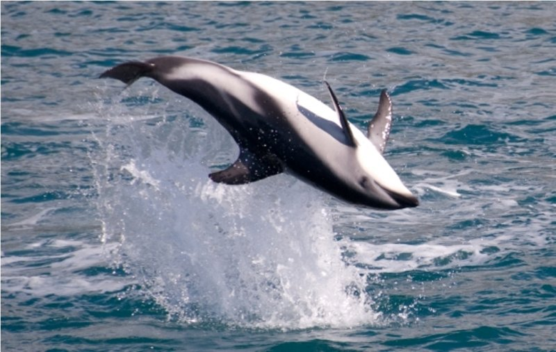 Happiness is a Wild Dolphin!