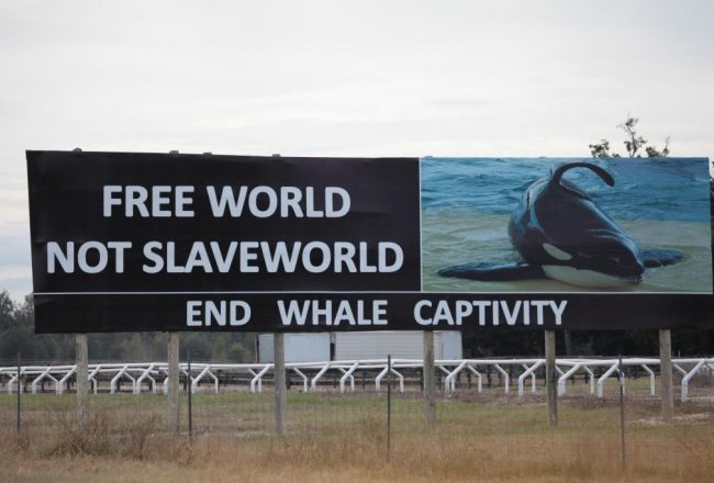 Free World not SeaWorld!