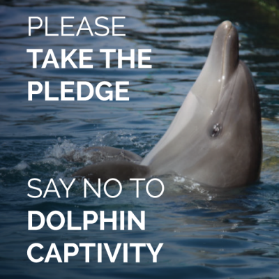 Take the Pledge Against Captivity Dolphin Project