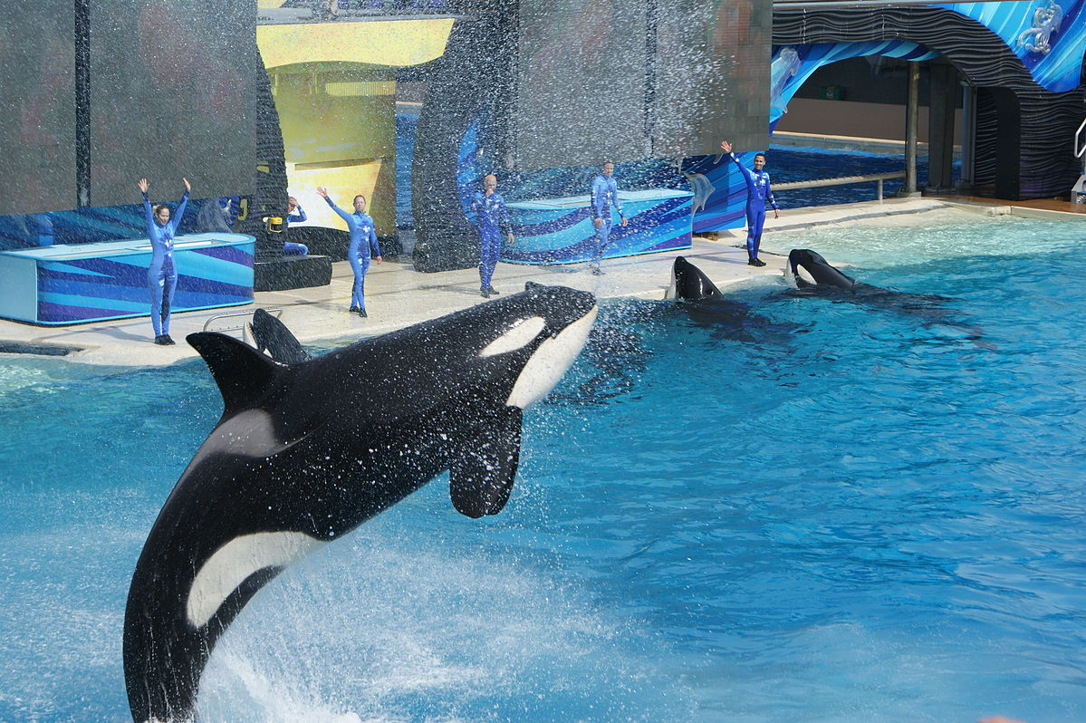 Orca show, SeaWorld