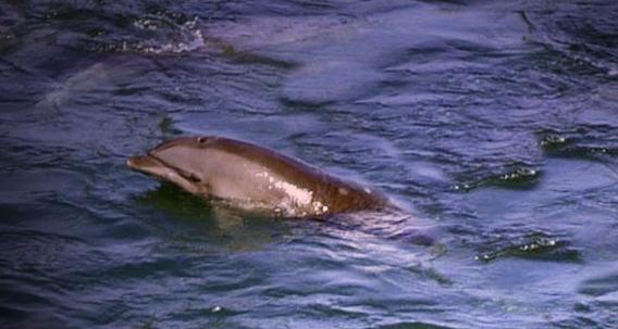 orphaned baby dolphin, Taiji