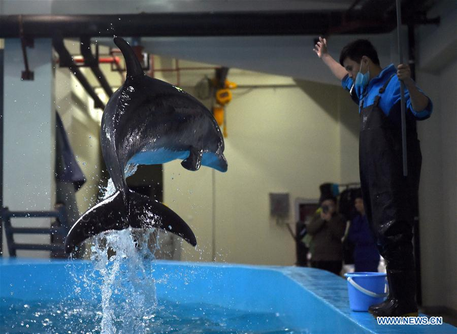 Bottlenose dolphin adjusts to new life of captivity