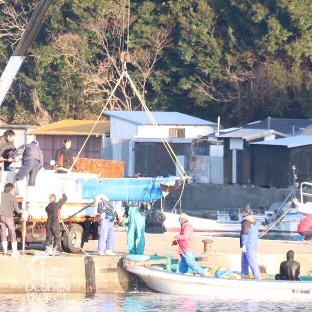 Transfer of bottlenose dolphins, destination unknown