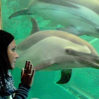 Vicki Kiely, Taiji Whale Museum