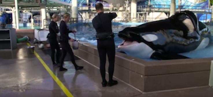 Tilikum, SeaWorld Orlando