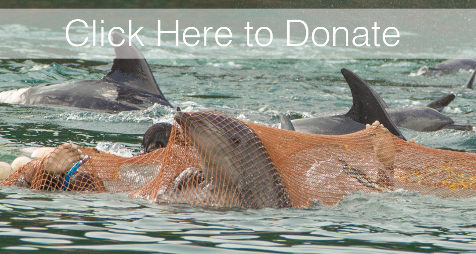 Donate to Dolphin Project