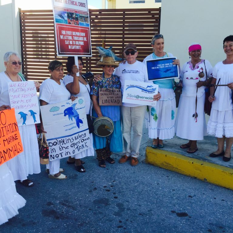 Ric O'Barry supports local activists in Cancun, Mexico