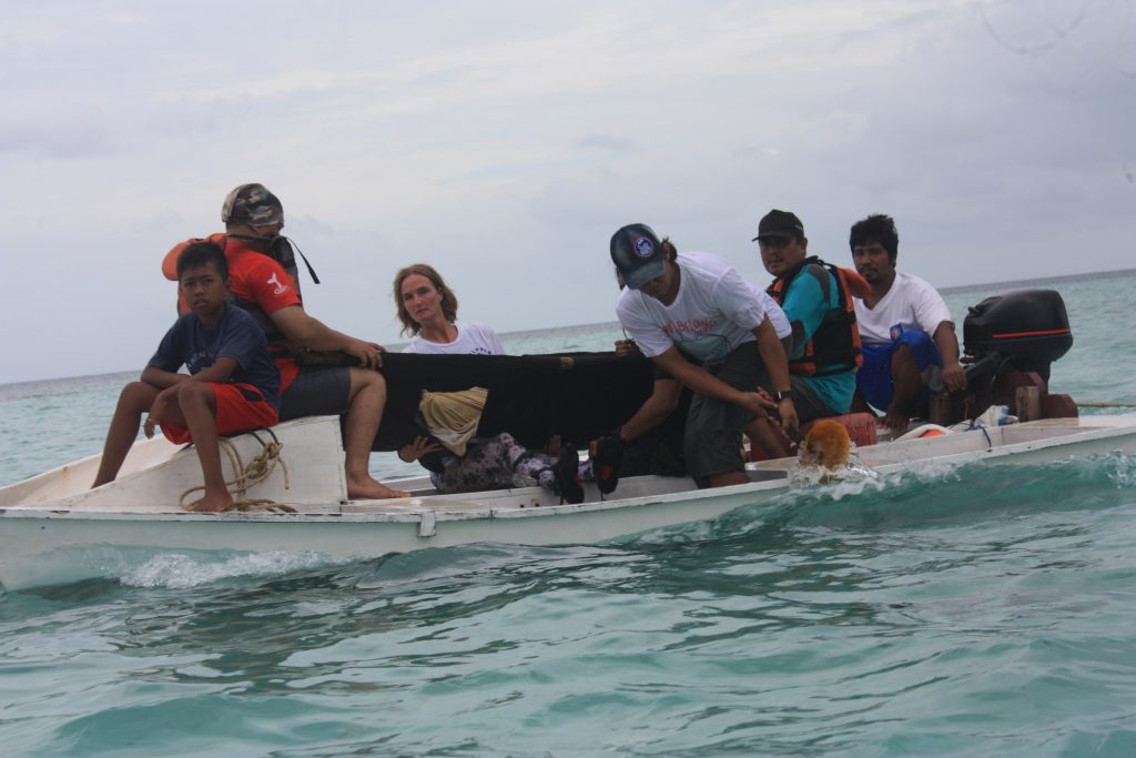 Munjawa being transported to the release location. Credit: DolphinProject.com