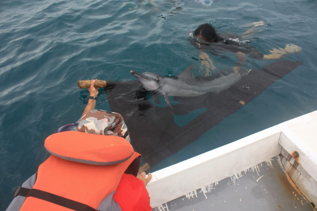 Munjawa takes one last look at our team, seconds before she was successfully released back in her home range. Credit: DolphinProject.com