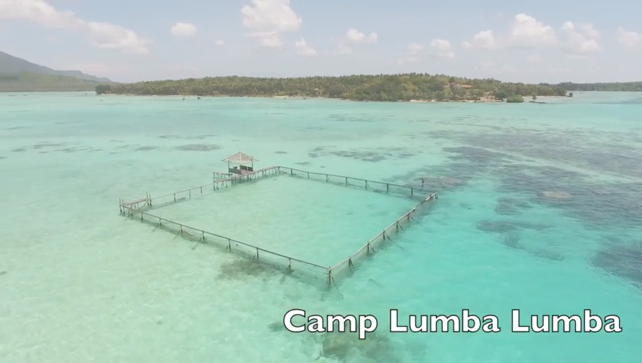 Camp LumbaLumba, the world's first permanent rehabilitation facility for rescued dolphins, Indonesia.