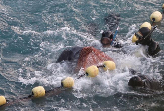 Taiji's dolphin hunts too cruel to be 'normalized'