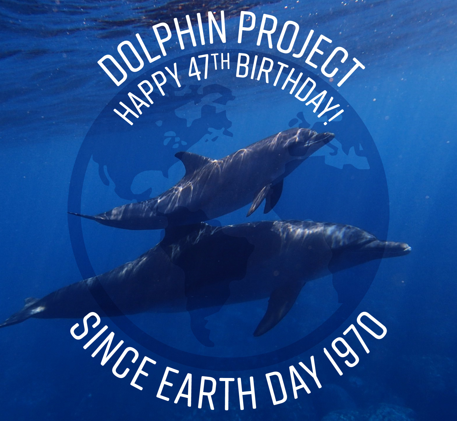 2017 marked Dolphin Project's 47th birthday.