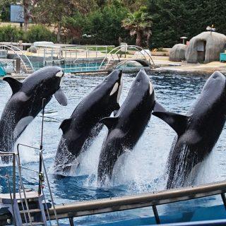 Orca show Marineland Antibes