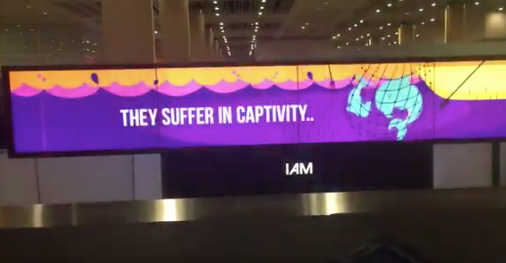 Dolphin Project anti-captivity digital ads at Bali Airport.