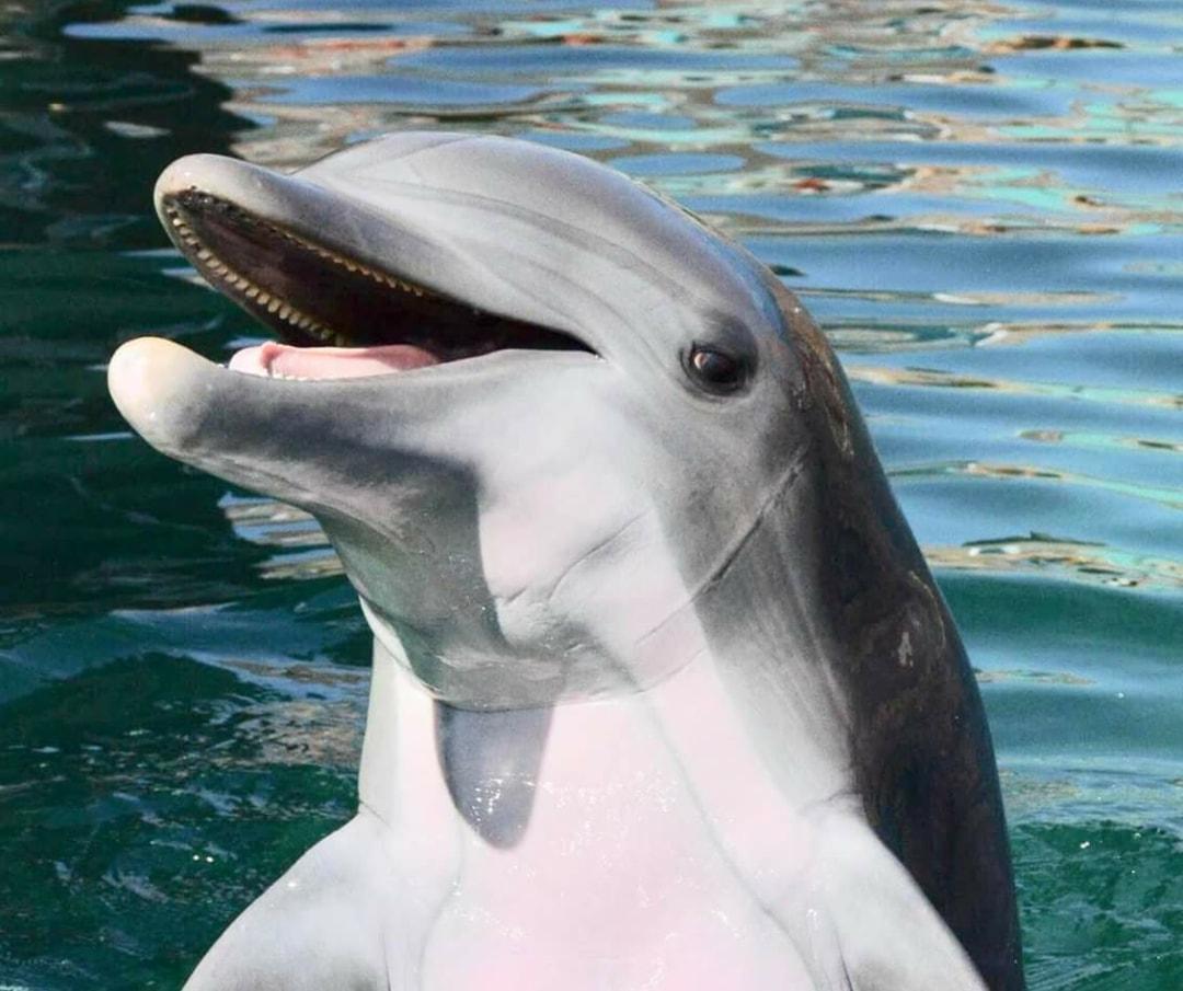 Alia, 10-year-old captive bottlenose dolphin has died at Dolphinaris, Arizona