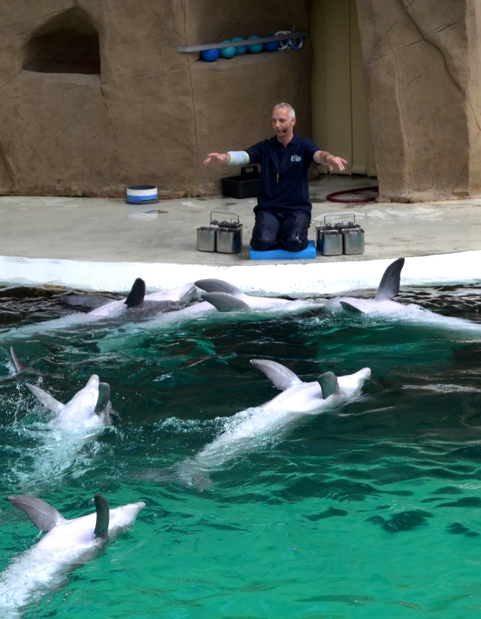 Through the use of food control, the trainer gains complete control over the dolphins.