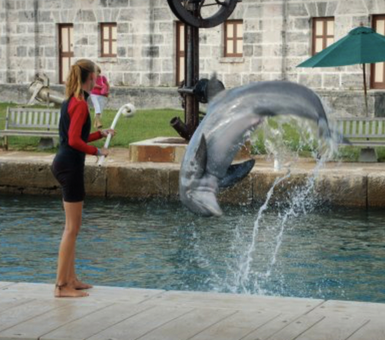 Dolphin Trainer Turned Advocate