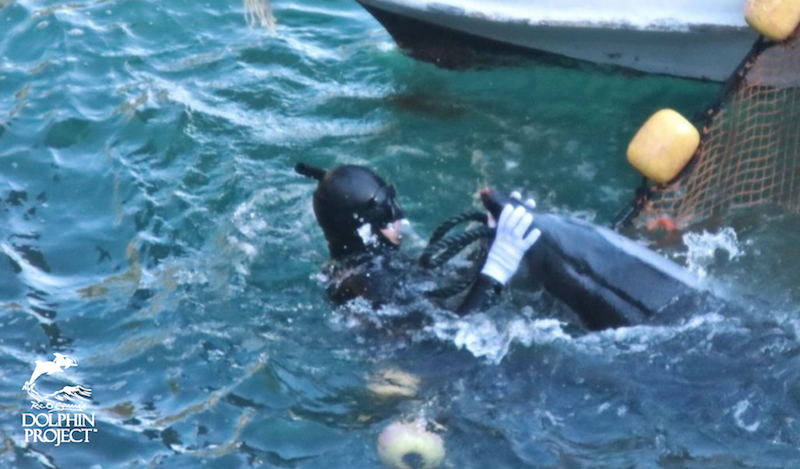 Taiji's violent captive selection process.