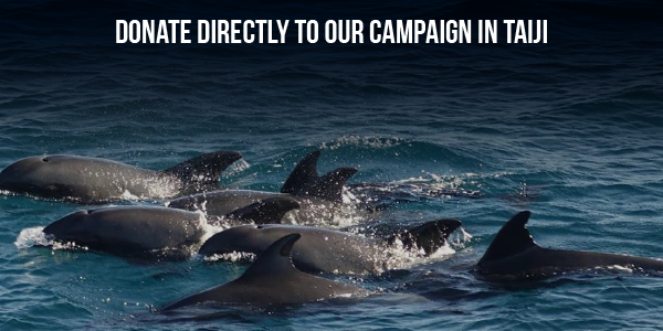 Donate directly to our campaign in Taiji
