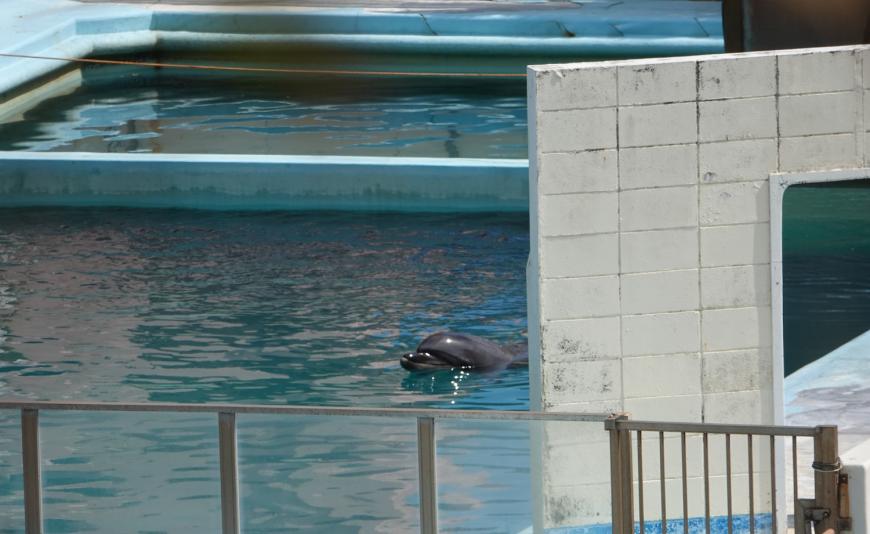 Bottlenose dolphin Honey abandoned in Inubosaki Marine Park Aquarium, city of Choshi in Chiba prefecture, Japan