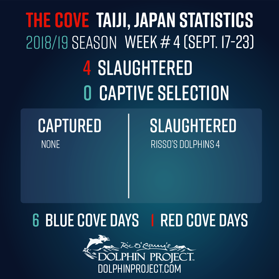 2018-19 Taiji Weekly Updates - Week #4