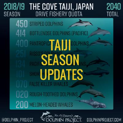 taiji season updates