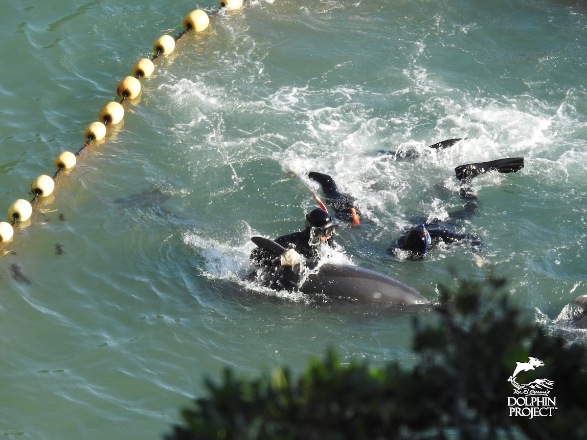 The captive selection process is violent and traumatic.
