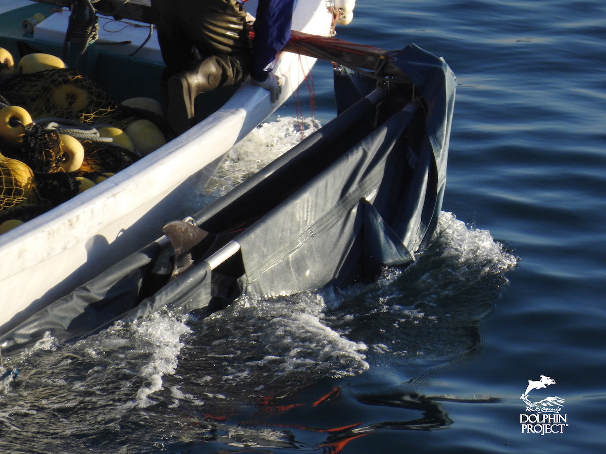 "A dolphin chosen for ""life"" in captivity is carted to a nearby pen, Taiji, Japan."