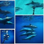 Dolphin Project & RYOT bring you the worlds first wild dolphin Virtual Reality PSA.