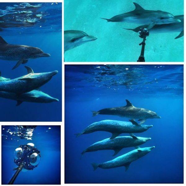 EXCLUSIVE: Virtual Reality Wild Dolphin PSA