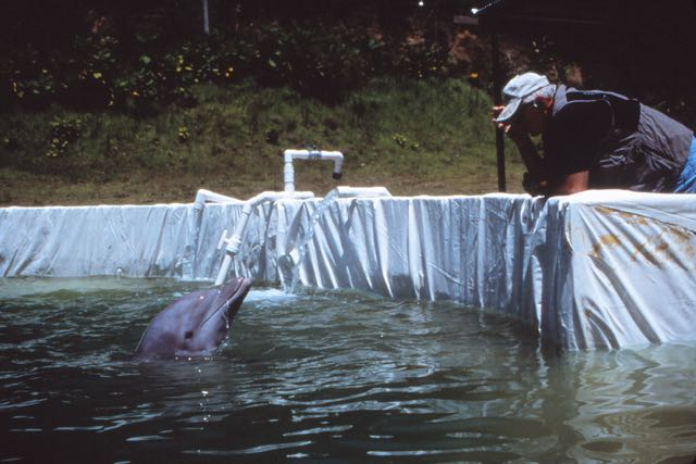 Ric O'Barry checking on the condition of Ariel and Turbo.