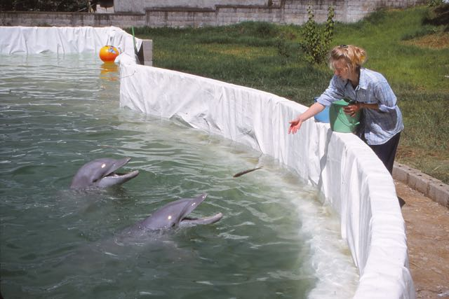 Dolphins Rescued from the Mountains of Guatemala