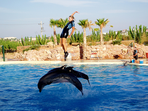 Dolphin Shows are Illegal in Greece