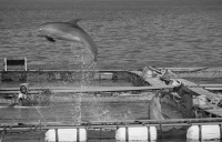Ric O'Barry Asks Taiji to Release Captive Dolphins in Path of Typhoon Talas