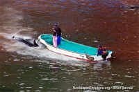 A New Slaughter of Pilot Whales in Taiji