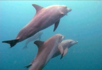 All Korean Captive Dolphins Back with their Families
