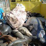 Cetacean-Shark_Tanjung_luar_6-13_
