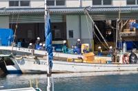Taiji Fishermen Catching Fish, Not Dolphins