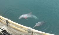 Korean Dolphins Returning to the Sea
