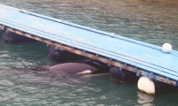 Ex-SeaWorld Trainers Speak Out