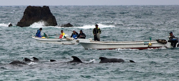 15 Pilot Whales Slaughtered in the Cove
