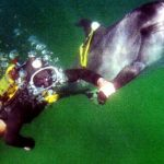 RT_dolphin