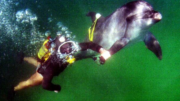 Cheryl The Russian Navy Dolphin