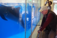 ALERT: Help Shut Down the Smallest Dolphin Tank in the World