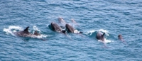 Return to Taiji and Slaughter