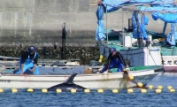 Captive Dolphins Will Die in Taiji from Storm