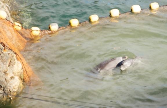Taiji Slaughter Season Ends in Blood