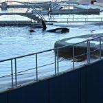 antibes-marineland-2012-orque_YvonGodefroid