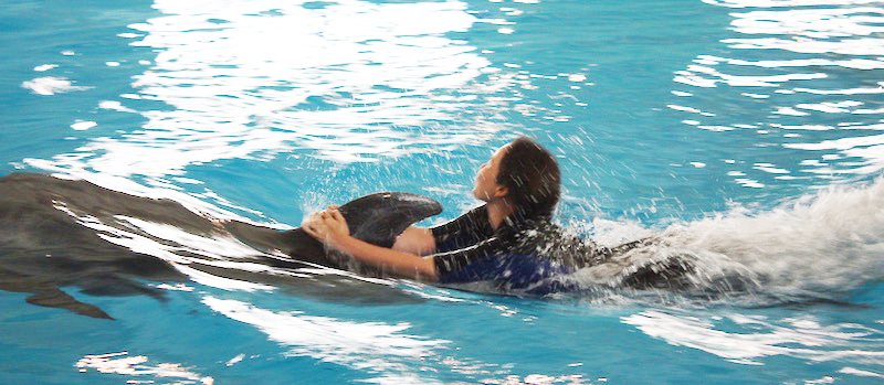 Swim with Dolphins Captivity Issues Cruise Ships Tourism