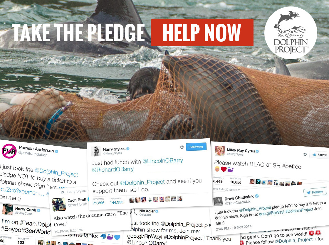 Take The Pledge to Not Visit a Dolphin Show!